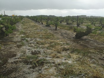 Katusha Vineyard with hail on ground
